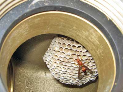 (4) Wasps have taken up residence in the FDC that is missing its protective cap. Use a tool, not your hand, to push open clappers and remove debris.