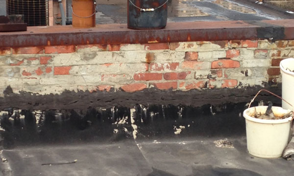 Roof crickets vary in size but can contribute to rapid fire spread.