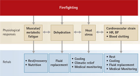 Figure 2. Mechanisms by Which Rehabilitation Mitigates the Physiological Strain of Firefighting
