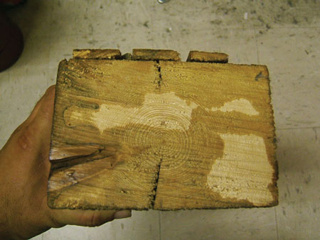 """(2) A piece of """"slow-growth"""" wood from a braced frame building built in the 1870s. The rings are tight. There is very little moisture in this wood."""
