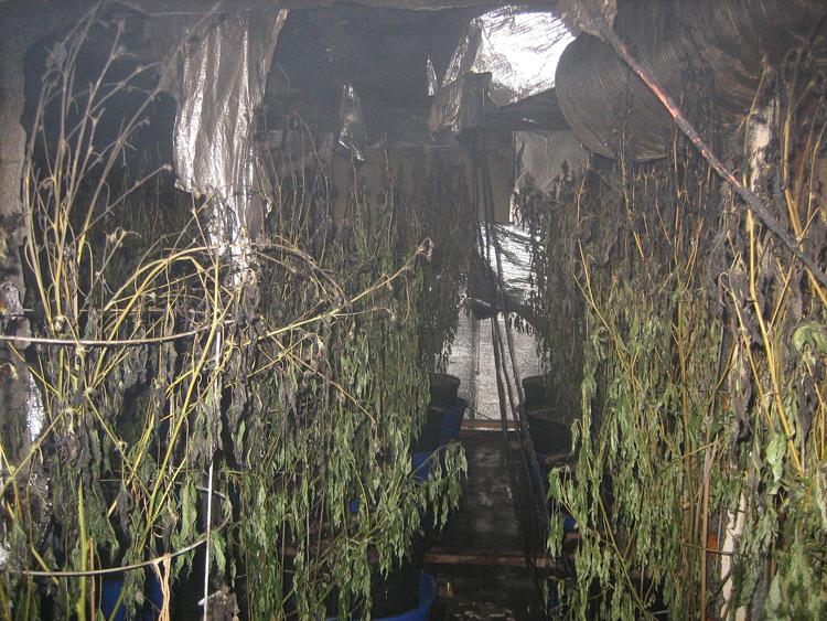 The Deadly Hazards of Indoor Marijuana Grow Houses