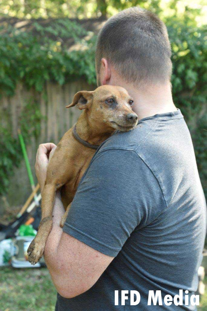 Dog reunited with family member