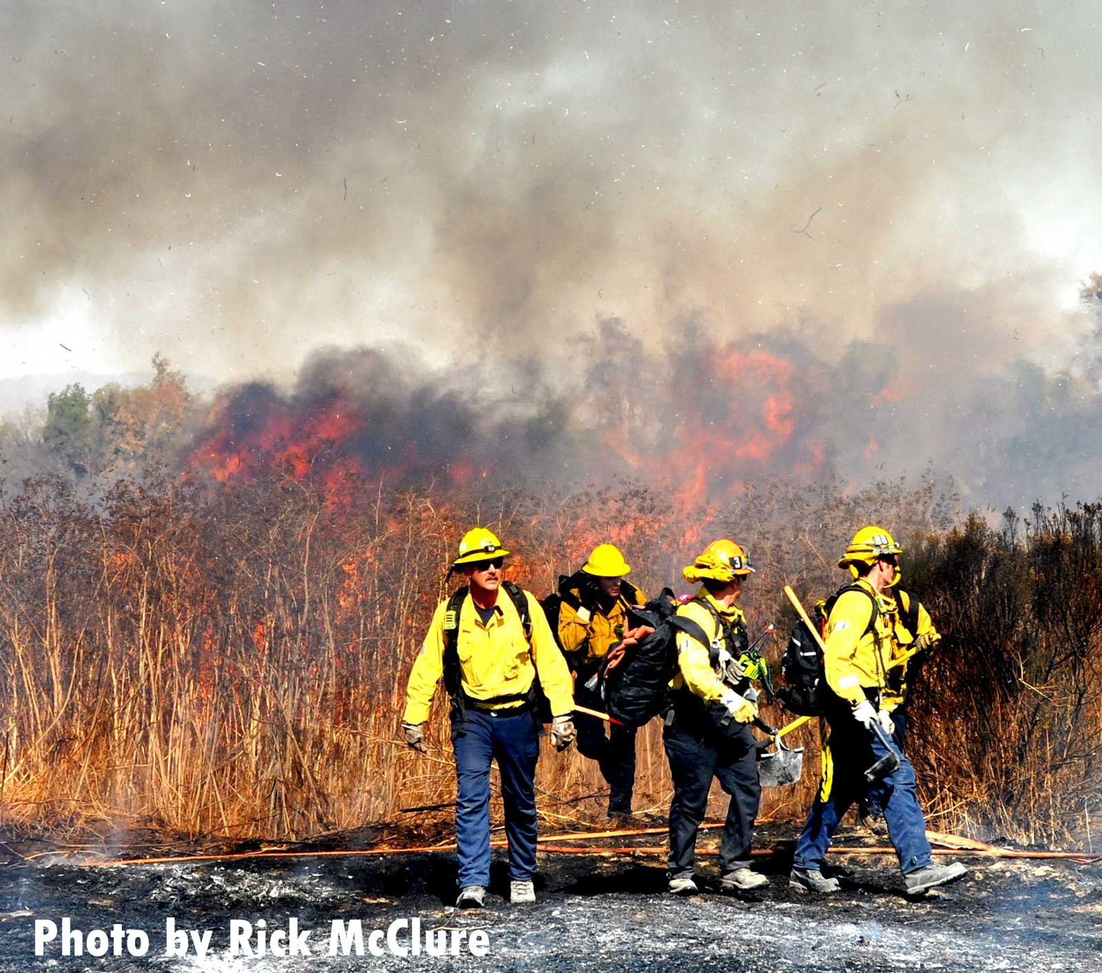 LAFD firefighters at vegetation fire