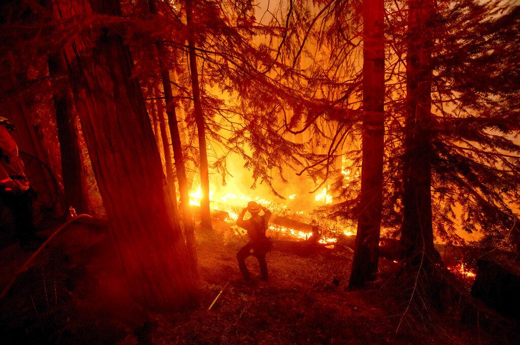 Wildland firefighter in California