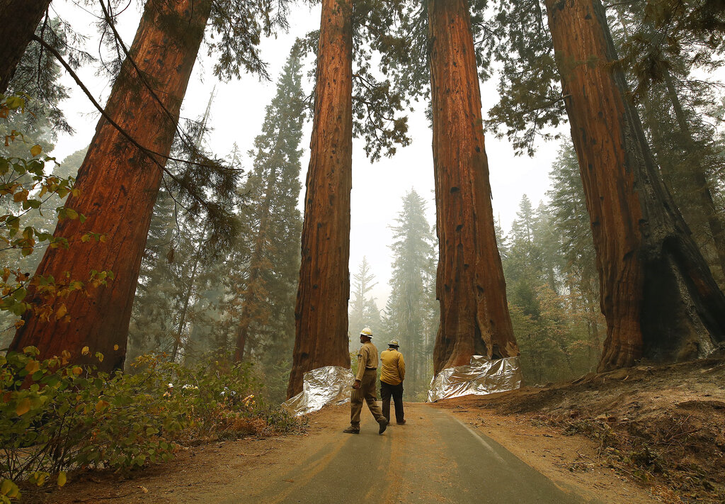 Four Guardsmen at the entrance to General Sherman at Sequoia National Park