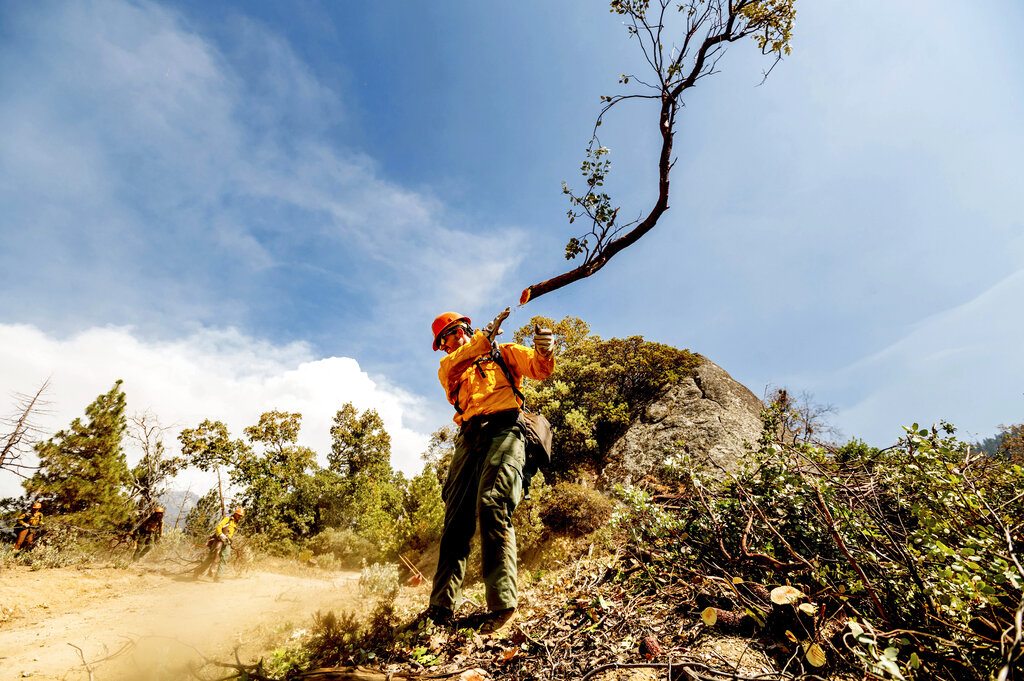 A member of the Roosevelt Hotshot Crew clears a firebreak.