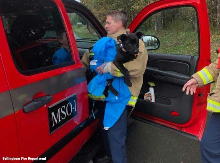 Puppy Burned in WA Homeless Encampment Fire