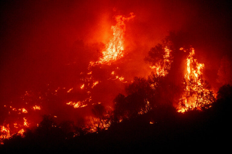 Four Hurt by Tree in Wildfire Released From Hospital